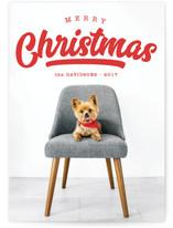 Curve Christmas Photo Cards
