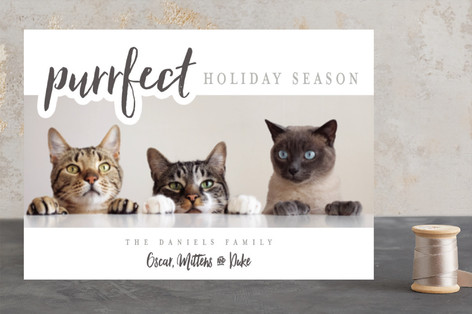 A Purrfect Christmas Holiday Photo Cards