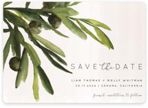 olive bough
