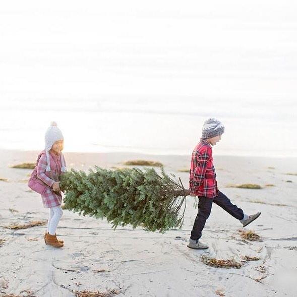 Kids carrying tree