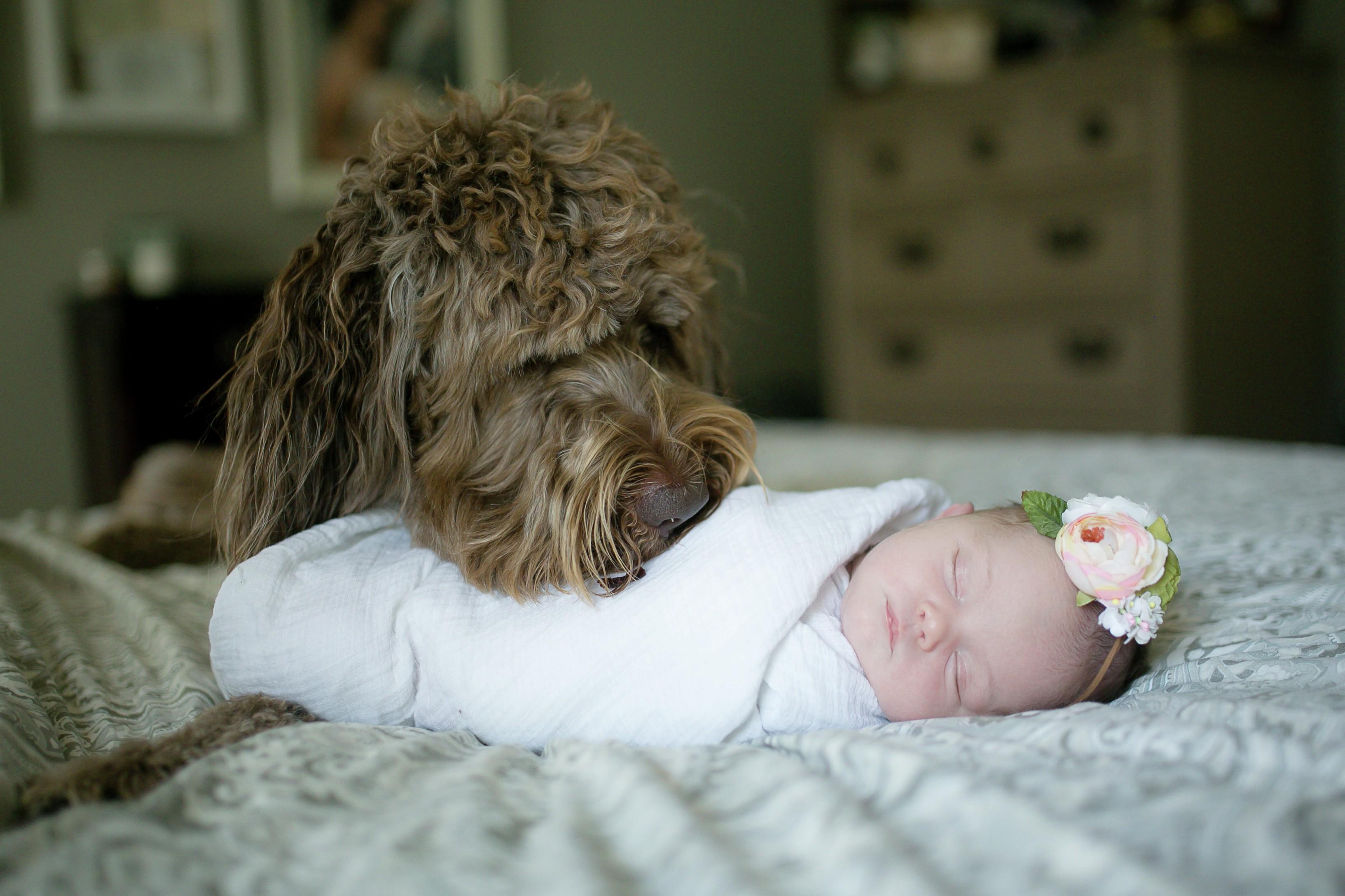 Newborn Photo at Home