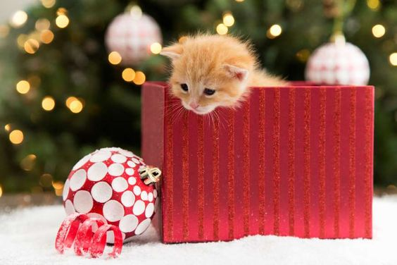 Kitten with present