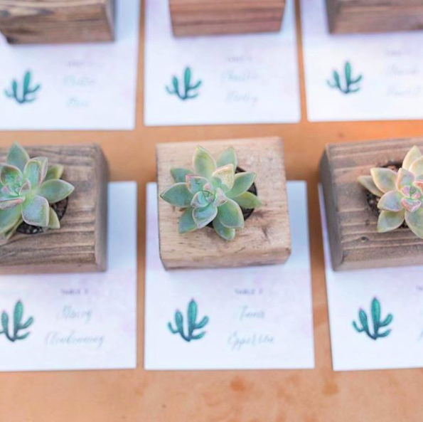 succulents with wedding escort cards