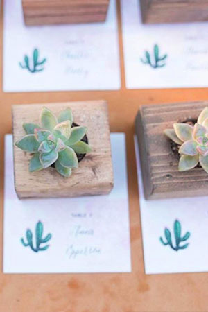 Succulents with escort cards