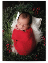 This is a green babys first christma by Cindy Reynolds called Tender And Mild with standard printing on signature in postcard.