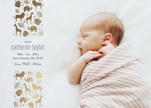 Safari Foil-Pressed Birth Announcement Cards By Carolyn MacLaren