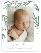 This is a green birth announcement magnet by Joanna Griffin called Olive Branches with standard printing on magnet paper in magnet.