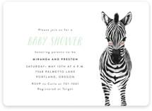 Baby Animal Zebra