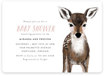 Baby Animal Deer