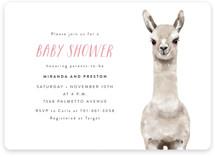 Baby Animal Llama