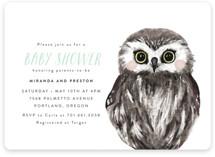 Baby Animal Owl