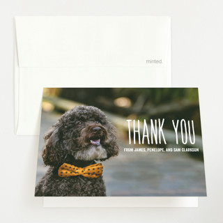 From your furry first-born Birth Announcements Thank You Cards