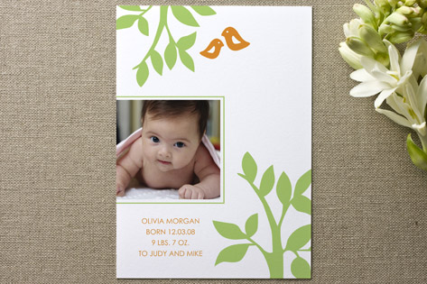 The Birds and Trees Birth Announcements