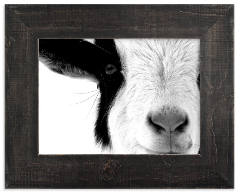 """Pawnee"" - Limited Edition Art Print by Leslie Le Coq in beautiful frame options and a variety of sizes."