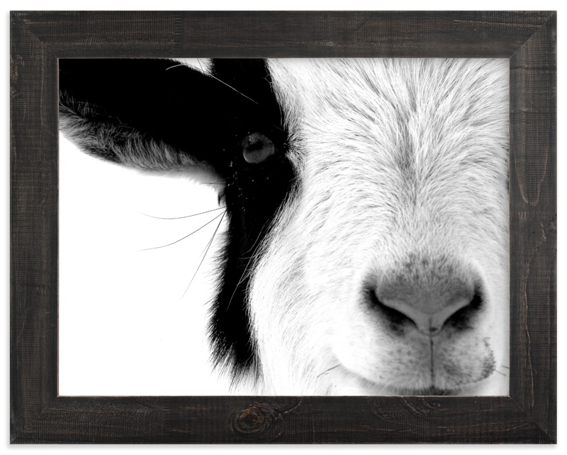 """""""Pawnee"""" - Limited Edition Art Print by Leslie Le Coq in beautiful frame options and a variety of sizes."""