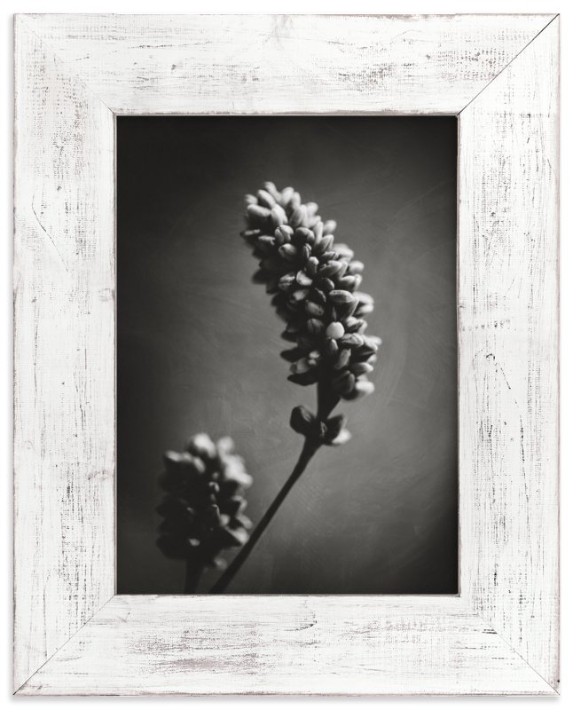 """Wild Grass Study"" - Limited Edition Art Print by Stacy Kron in beautiful frame options and a variety of sizes."