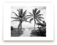 Coconut gate by Eliane Lamb