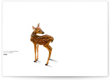 A Deer Friend by Andrew McClintock