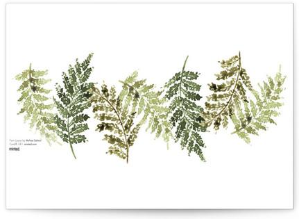Fern Leaves Desktop Wallpaper