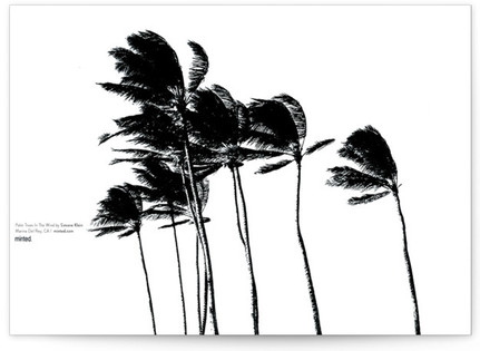 Palm Trees in the Wind Desktop Wallpaper