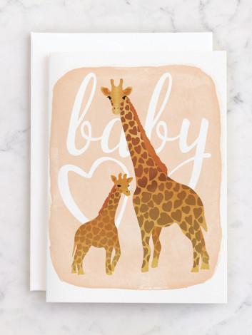 Baby Giraffe