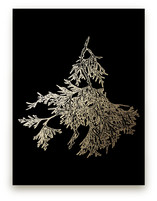 Northern White Cedar by LemonBirch Design