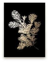 Silver Fir by LemonBirch Design