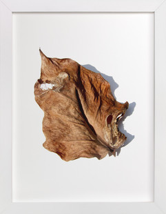 Brown Leaf Study #1 Art Print