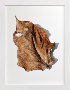 Brown Leaf Study #1 Art Print