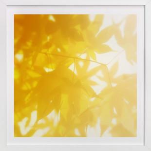 sun bathing leaves Art Print