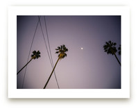 Pink Palms by Alexandra Nazari