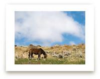 Guacho's Horse by Jason Derck