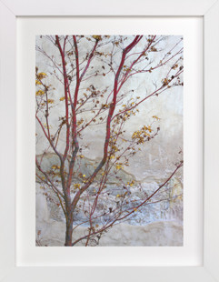 Courtyard Maple Art Print