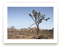 Joshua Tree With Rock F... by Kathy Van Torne