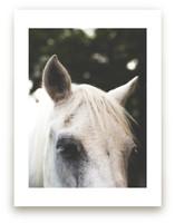 Quiet Pony by Pamela Steiner