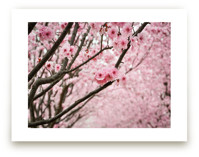 flowering path