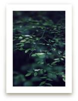 Forest Focus by Satpreet K