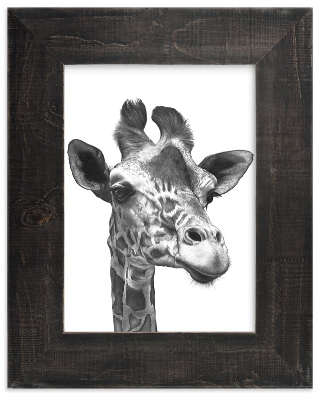 wildlife pencil drawing New Giraffe wall art print signed Limited edition 350