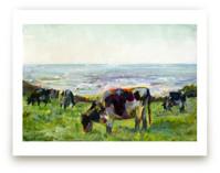 Marin Cows