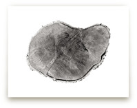 Tree Rings pt. 1 by Mackenzie Darrach