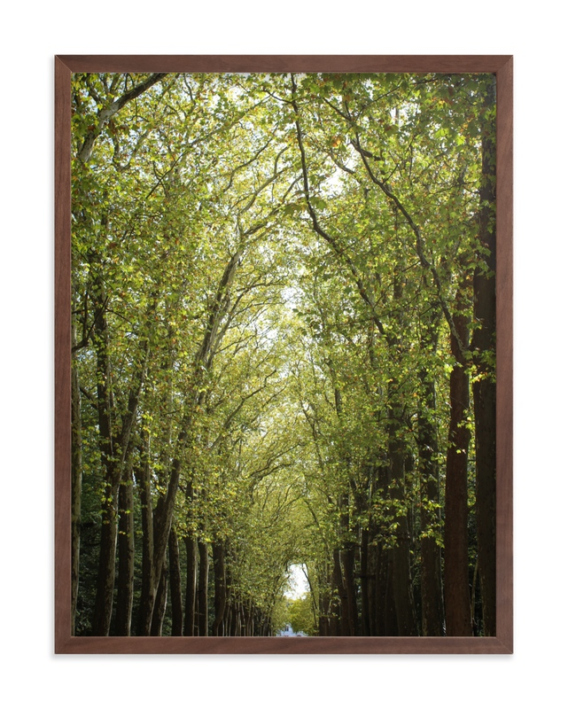 """""""Canopy of Trees"""" - Limited Edition Art Print by Eric Clegg in beautiful frame options and a variety of sizes."""