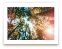 Redwoods Surround Me by Elena Kulikova