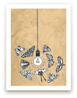 Like Moths to a Light