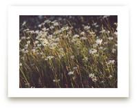 Summer Flowers Art Prints