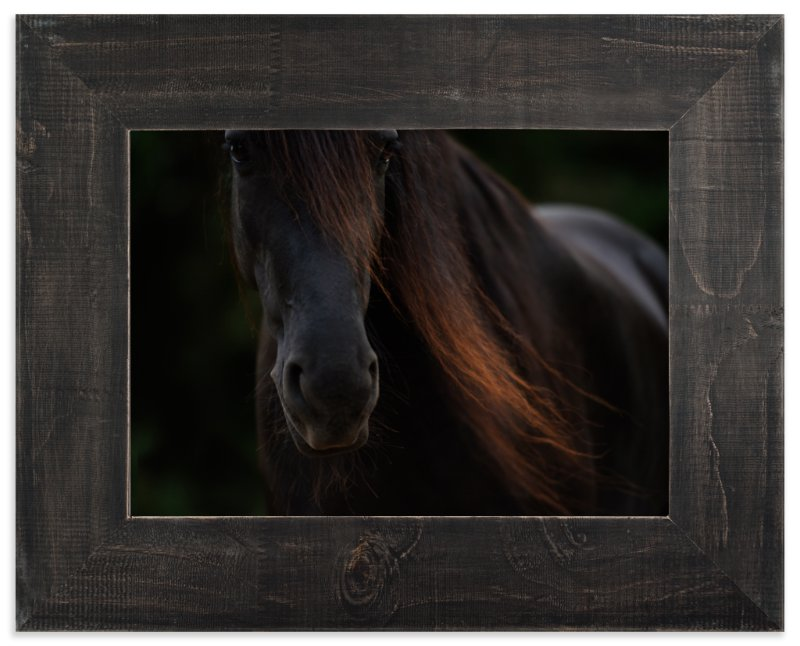 """""""Rocinante"""" - Limited Edition Art Print by Amy Carroll in beautiful frame options and a variety of sizes."""