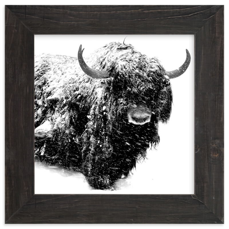 """""""Below Zero"""" - Limited Edition Art Print by Leslie Le Coq in beautiful frame options and a variety of sizes."""