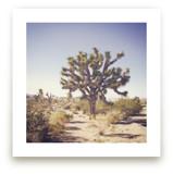 Joshua Tree by Abby Laverick