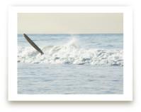 Wipeout, Venice Beach