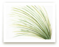 Tall Grass Watercolor