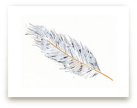 Grey Feather by Prittybird